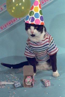 BIRTHDAY GREETING CARDS CatTricks Greetings